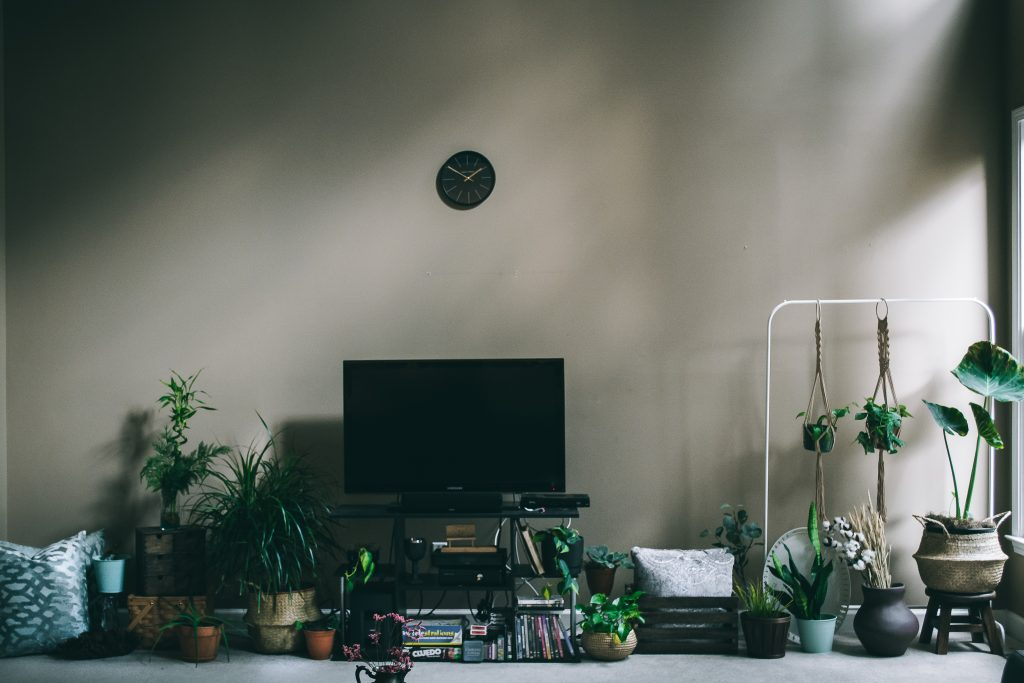 Indoor Plants are a great way to make a healthier living environment.